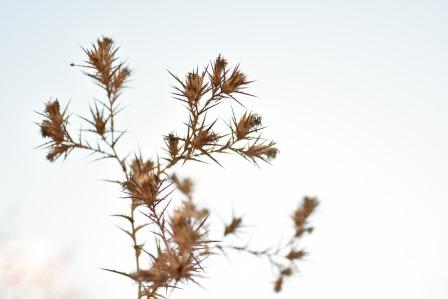פרח, עץ התבוננות