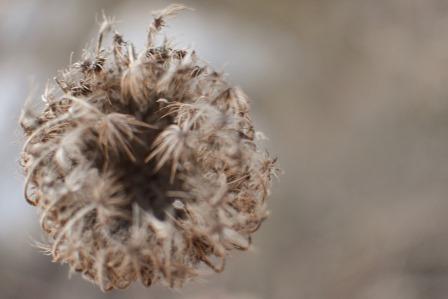 פרח, המצלמה ככלי התבוננות