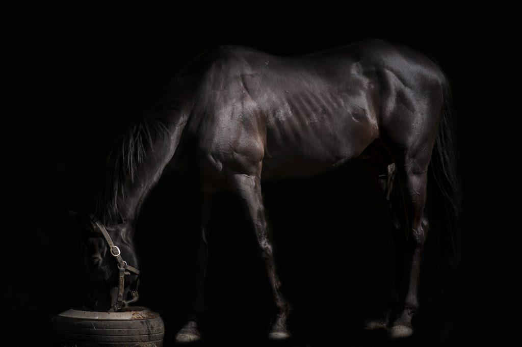 שחור דיכאון אחרי לידה סוס שחור