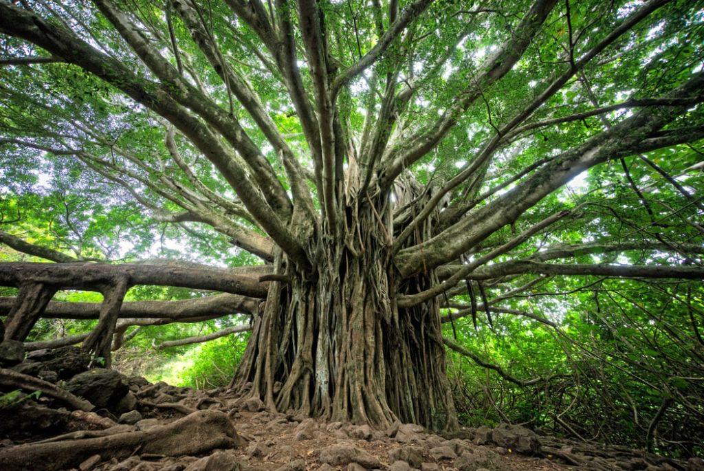 אמא אדמה עץ