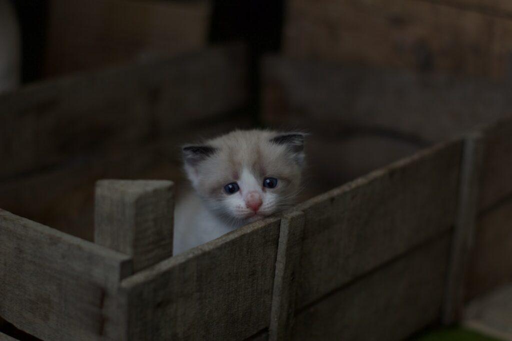 דיכאון וחרדות אחרי לידה הרגשתי לבד חתול