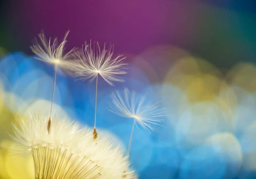 פרח צבעוני המתנה לבדיקת הריון חיובית