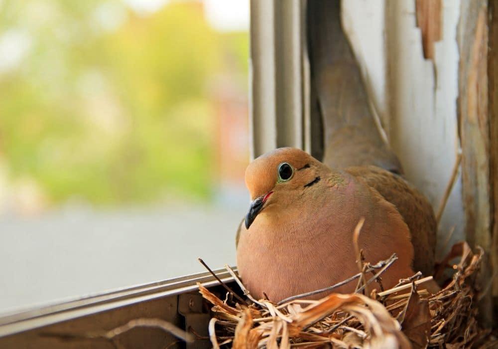 ציפור מקננת סימנים להריון לפני בדיקת בטא