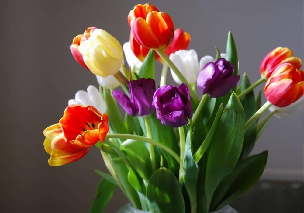 פרחים תמיכה בדיקת הריון בטא