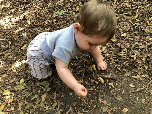 תינוקת זוחלת ואוספת עלים עלים